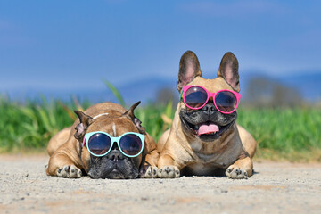 Adorable cute happy French Bulldog dogs wearing sunglasses in summer in front of meadow and blue sky on hot day