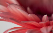 Abstract Blurred Flower Petal ...