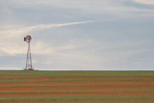 Great Plains Winter Wheat & Windmill 6815