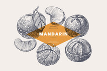 Hand-drawn Mandarin. Dessert Citrus Fruit, Lobule, And Whole. Organic Food Concept. It Can Be Used As An Element Of The Design Of Markets, Menus, And Packaging. Vintage Botanical Illustration.