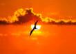 Leinwandbild Motiv Sunset Bird Silhouette