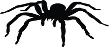 Spider Icon Isolated On White ...