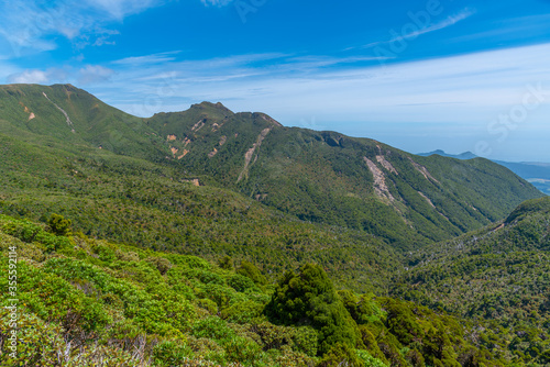 Vegetation on slopes of Egmont national park in New Zealand #355592114