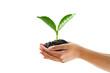 Leinwandbild Motiv hand holding young plant isolate on white background