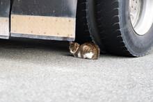 タイヤの下で丸くなっ...