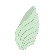 Color Illustration Sea Green Shell Isolated On A White Background. Underwater Wildlife.