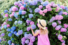 Little Girl Smell Big Hydrangea Bushes In Garden. Pink, Blue, Lilac Flowers Blooming In Spring And Summer. Kid Wearing In Pink Dress, Straw Hat. Romantic Concept Of Childhood, Tenderness.
