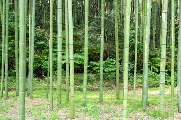 かぐや姫の散歩道(木曽川渡し場遊歩道) 日本の岐阜県可児市で撮影。