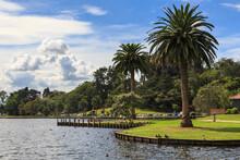 Lake Rotoroa In Hamilton, New Zealand, Surrounded By The Trees Of Hamilton Lake Domain