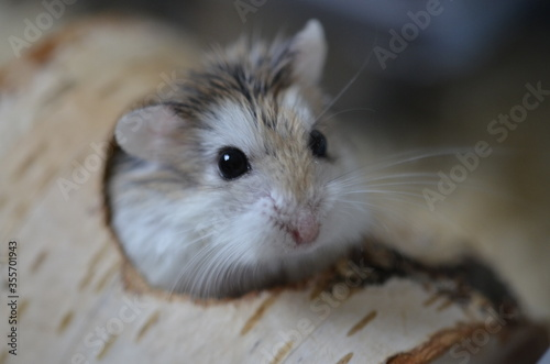 Photo hamster in a glass