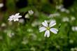 Przybliżenie na kwitnące kwiaty
