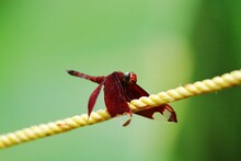 Red Dragonfly Resting On A Yel...
