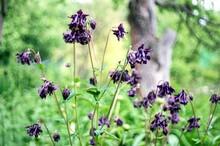 A Bush Of Dark Purple Flowers ...