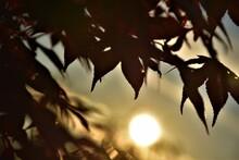 Zachód Słońca W Ogrodzie