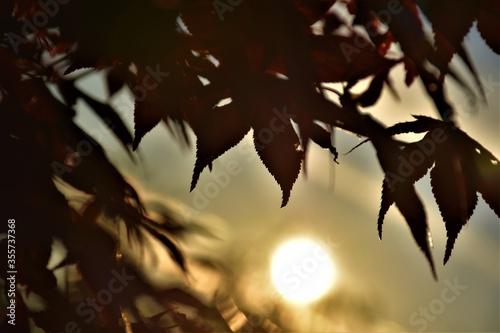 Zachód słońca w ogrodzie Fotobehang