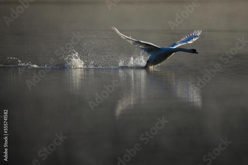 Ptaki Slika na platnu