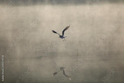 Ptaki Tapéta, Fotótapéta