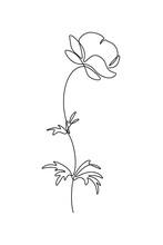 Trollius Or Globe Flower In Co...