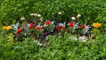 Salvia Splendens, Tagetes Erec...