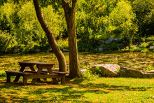 Wooden Picnic Table Under Shade Tree
