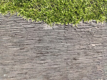 Texture Of An Old Dead Tree With Green Moss On Top