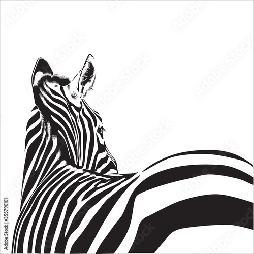 Zebra animal illustration, nature conservation vector black and white Wallpaper Mural