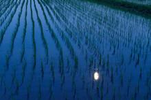 月が映り込む水田と風に揺れる稲