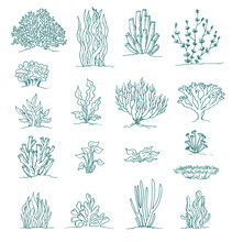 Set Of Coral And Underwater Plants Ink Drawings On White