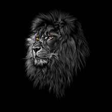 Lion Animal Illustration, Nature Conservation Vector