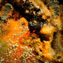 Green Mold On Rotten Food. Mol...