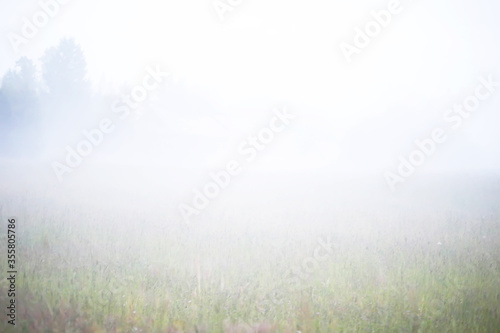 Foto Fog in the field. Evening nature summer with white fog.