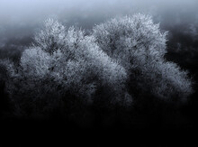 Trees In Frozen