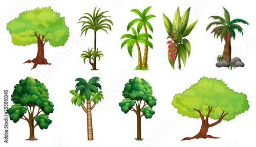 Fototapeta Set of variety plants and trees obraz