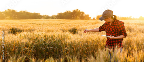 Foto A woman farmer examines the field of cereals and sends data to the cloud from the tablet