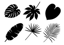 Tropical Leaves Silhouettes Is...