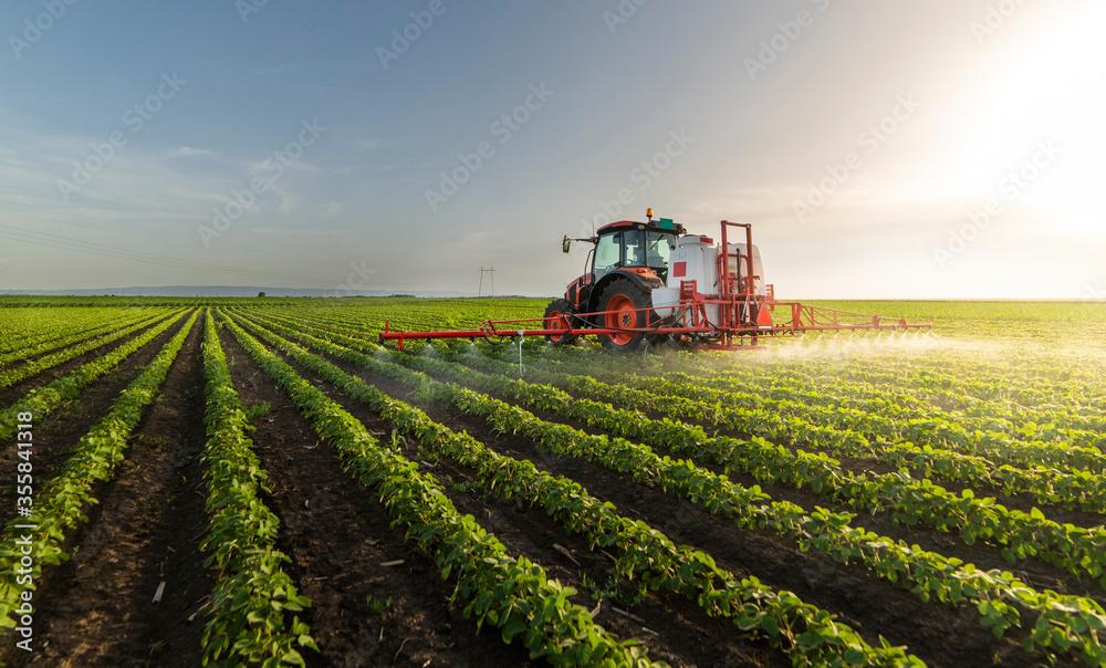 Fototapeta Tractor spraying soy field in sunset.