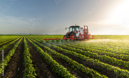 Fototapeta Tractor spraying soy field in sunset. obraz