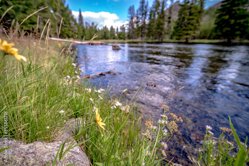 beautiful nature scenes along yellostone river in wyoming