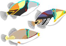 Reef Triggerfish, Picasso Triggerfish, Assasi Triggerfish
