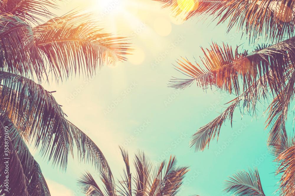 Fototapeta Copy space of tropical palm tree with sun light on sky background.