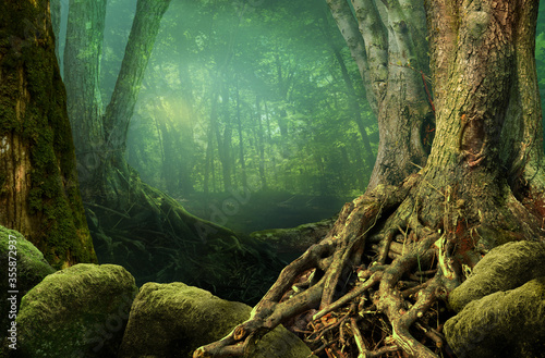 Fotografía Landscape with fantasy forest, old trees, weird roots and mossy rocks on hazy gr