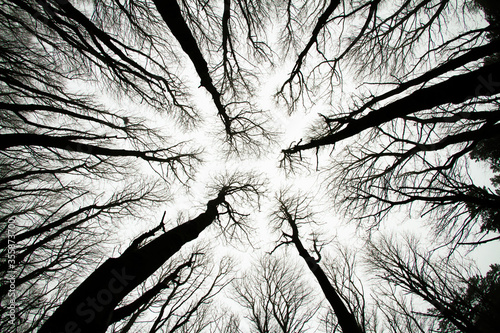 Looking up at spooky trees in dark woodlands Fototapet