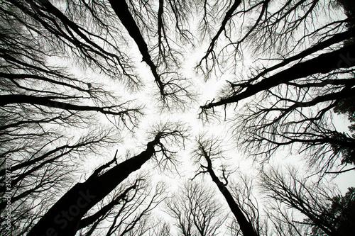 Foto Looking up at spooky trees in dark woodlands