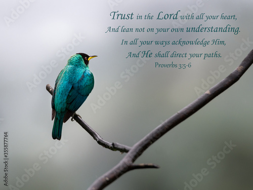 Cuadros en Lienzo Inspirational, encouraging and uplifting Bible Verses printed on beautiful bird photography