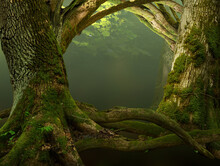 Old Mossy Trees With Crooked Branches And Roots. Composed As A Frame Or Fairytale Gates To Forest.