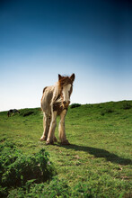 Wild Palamino Young Foal Horse...