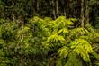 Leinwanddruck Bild - A rain forest along the Great Ocean Road in Australia.
