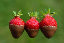 Three Red Fresh Strawberries, ...