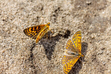 Two Bright Butterflies On A Su...
