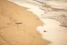 Jellyfish Washed Up On Seashor...